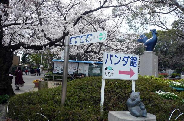 panda&sakura@kobeblog1.jpg